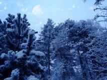 El bosque del paisaje del invierno en helada de la nieve con la luna protagoniza Imagen de archivo