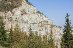 El bosque del pino de montañas en tiempo soleado Viaje y aventura en verano u otoño El río de la montaña El concepto de la libert imágenes de archivo libres de regalías