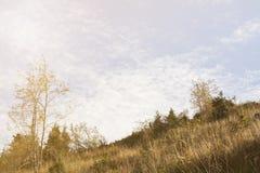 El bosque del pino de montañas en tiempo soleado Viaje y aventura en verano u otoño El río de la montaña El concepto de la libert foto de archivo libre de regalías