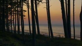 El bosque del pino en el mar Báltico en una puesta del sol se enciende almacen de metraje de vídeo