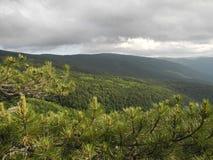El bosque del pino, montañas crimeas Fotos de archivo