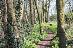 El bosque del uithoorn Foto de archivo libre de regalías