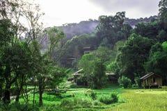 El bosque del verde de pueblo y la naturaleza hermosa imagen de archivo libre de regalías