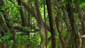 El bosque denso fue inundado por períodos extendidos almacen de metraje de vídeo