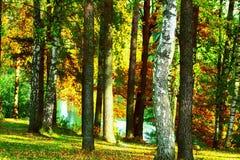 El bosque en la charca Fotografía de archivo