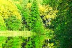 El bosque en la charca Foto de archivo libre de regalías