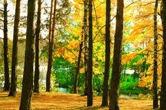 El bosque en la charca Imagen de archivo libre de regalías