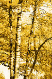 El bosque en la charca Foto de archivo
