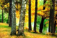 El bosque en la charca Imagenes de archivo