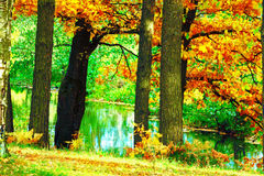 El bosque en la charca Imagen de archivo