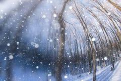 El bosque en la nieve en una tarde del invierno Fotos de archivo
