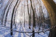 El bosque en la nieve en una tarde del invierno Imagen de archivo