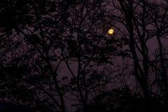 El bosque en la noche Imágenes de archivo libres de regalías