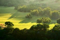 El bosque en la puesta del sol del prado Foto de archivo