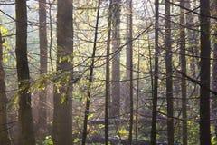 El bosque en la puesta del sol, Rusia Fotografía de archivo