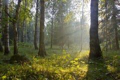 El bosque en la puesta del sol, Rusia Fotografía de archivo libre de regalías