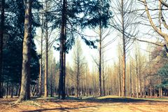 El bosque en otoño, hoja del árbol comienza a caer Imágenes de archivo libres de regalías