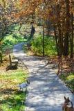 El bosque en el parque con los rastros y los amantes bench con los perros Fotos de archivo