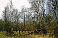 El bosque en Rusia en la primavera temprana Imagen de archivo