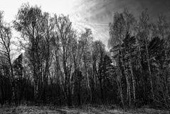 El bosque en Rusia en la primavera temprana Imagen de archivo libre de regalías