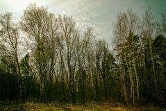 El bosque en Rusia en la primavera temprana Foto de archivo libre de regalías