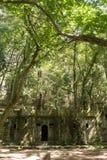 El bosque encantado de Aldan imagenes de archivo
