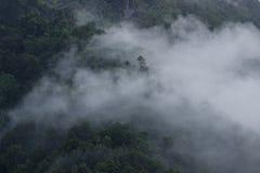 El bosque encubierto por la niebla fotografía de archivo