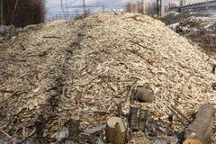 El bosque es destruido por los madereros Espacio vacío sin los árboles con los tocones y las astillas fotografía de archivo