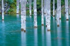 El bosque hundido del lago Kaindy Imagenes de archivo