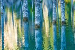 El bosque hundido del lago Kaindy Foto de archivo