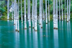 El bosque hundido del lago Kaindy Imágenes de archivo libres de regalías