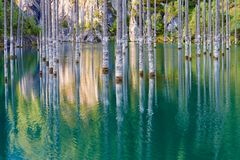 El bosque hundido del lago Kaindy Fotos de archivo libres de regalías