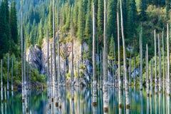 El bosque hundido del lago Kaindy Foto de archivo libre de regalías