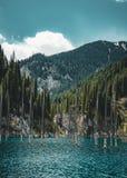 El bosque hundido del lago Kaindy El lago Kaindy, significando el ` del lago del árbol de abedul del ` es un lago metro-largo 400 Fotografía de archivo