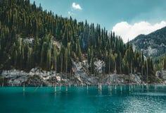 El bosque hundido del lago Kaindy El lago Kaindy, significando el ` del lago del árbol de abedul del ` es un lago metro-largo 400 Imagen de archivo libre de regalías