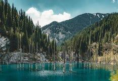 El bosque hundido del lago Kaindy El lago Kaindy, significando el ` del lago del árbol de abedul del ` es un lago metro-largo 400 Imagen de archivo