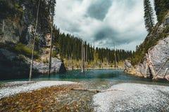 El bosque hundido del lago Kaindy El lago Kaindy, significando el ` del lago del árbol de abedul del ` es un lago metro-largo 400 Imágenes de archivo libres de regalías