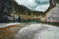El bosque hundido del lago Kaindy El lago Kaindy, significando el ` del lago del árbol de abedul del ` es un lago metro-largo 400 Imagenes de archivo