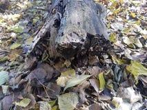 El bosque | Imágenes de la naturaleza - imágenes del árbol imágenes de archivo libres de regalías