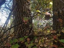 El bosque | Imágenes de la naturaleza - imágenes del árbol foto de archivo libre de regalías