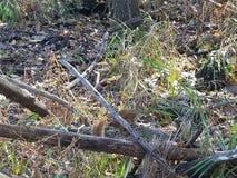 El bosque | Imágenes de la naturaleza - imágenes del árbol fotos de archivo libres de regalías