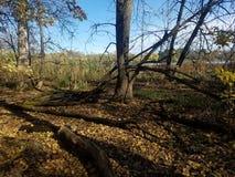 El bosque | Imágenes de la naturaleza - imágenes del árbol fotografía de archivo
