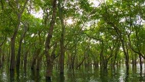 El bosque inundado Camboya almacen de video