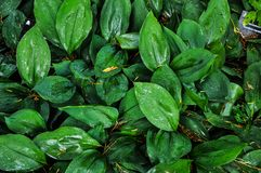 El bosque jugoso verde sale del fondo imagen de archivo