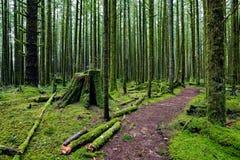 El bosque mágico Fotos de archivo