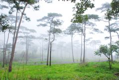 El bosque (madera) Imagenes de archivo