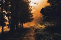 El bosque misterioso por la niebla imagen de archivo