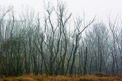 El bosque muerto Fotos de archivo libres de regalías