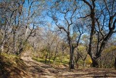 El bosque natural más grande de la nuez del mundo, acurrucado en un valle enorme de las mentiras de la cordillera de Chatkal de K imagen de archivo libre de regalías