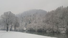 El bosque nevoso Foto de archivo